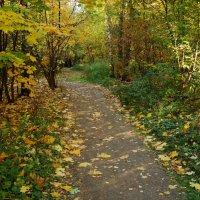 Осень, которая радует DSC09121 :: Андрей Лукьянов