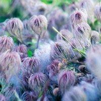 были цветы :: gegemoon