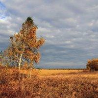 Осенний ветер :: Сергей Михайлович