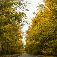 Дорога в осень ... :: Маry ...