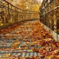 Осень :: Александр Попов