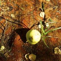 Осеннее яблоко :: Виктория