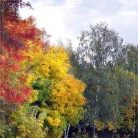 краски осени :: Дмитрий Мухин