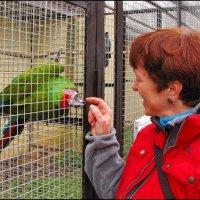 Игривый попугай. :: Ирина Нафаня