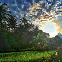 magic of Bali :: Александр