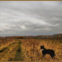Осенняя прогулка :: gregory `