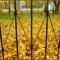 заповедник жёлтых листьев... :: Галина Филоросс