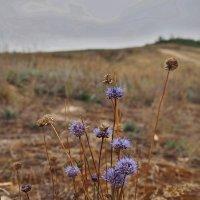 Осенние цветы :: Игорь Ковалев