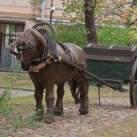 Гужевой транспорт :: Ирина Шарапова