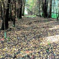в лесу :: vg154