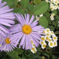 Цветы :: Виктория Дорохова