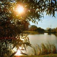 Скатилось солнышко к закату... :: Валентина Колова