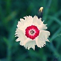 Белое пятно :: Андрей Гендин