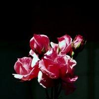 Букетик милых роз :: Наталья Джикидзе (Берёзина)