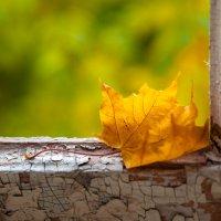 Желтый лист осенний :: Алексей Мартынов