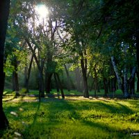Парк. :: George Lobanov