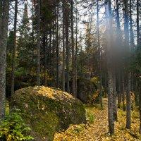 В сказочном лесу :: Олег