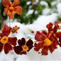 Сентябрьские цветы... :: galina tihonova