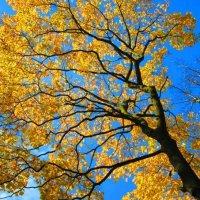Золото ветвей :: Самохвалова Зинаида