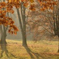 осень :: Dorosia