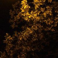 осенняя ночь... :: juriy luskin