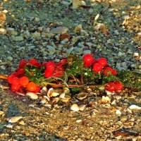 ягоды на песке :: Александр Корчемный