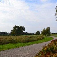 Осеннии дорожки. :: zoja