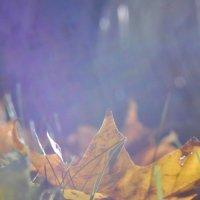 Когда падают листья... :: Александра Афанасенко