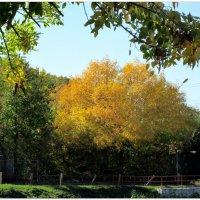 Осень примеряет золотой наряд... :: Тамара (st.tamara)