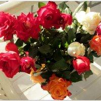 Свежие розы, только с клумбы... :: Тамара (st.tamara)