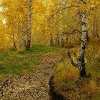 В сказочном лесу. :: nadyasilyuk Вознюк