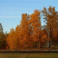 А лес стоит загадочный... :: nadyasilyuk Вознюк