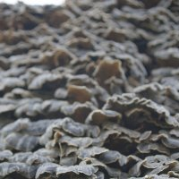 муравьинная лесница :: Дмитрий Проскурин