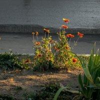 городские цветы :: Андрей ЕВСЕЕВ