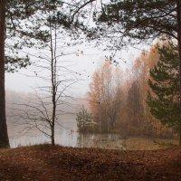 Грустная осень :: Sergey Apinis