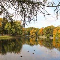 Осень - время красок) :: Дина Нестерова