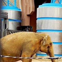 Слонёнок :: Milocs Морозова Людмила