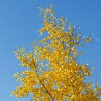 Осень :: Елена Зенкина