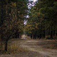 Осенний марафон :: Андрей Розов