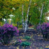 Осенние березы и цветы :: Юрий Стародубцев
