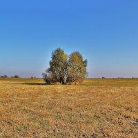 в поле :: Вадим Виловатый