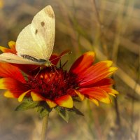 "А бабочка крылышками  ""бяг-бяг-бяг""! :: Елена"