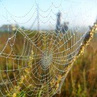 Капельки паутики :: лидия Кашицина