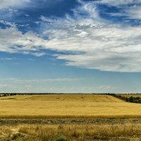 небо и  поле зрелой  пшеницы :: Дмитрий Потапкин