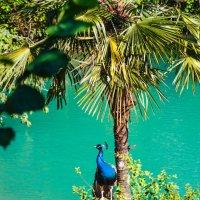 Голубое озеро :: Андрей Гриничев
