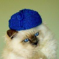 Бонифаций готовится к зиме. :: Светлана Мурзина