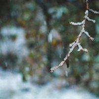 Первый снег. 8.10.2014 :: Маргарита Б.