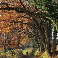 Прогулка по осени :: Boris Alabugin