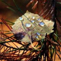 Оплакав листья дождевой росой... :: Лесо-Вед (Баранов)
