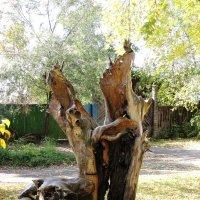 Деревянная скульптура :: Ольга Иргит